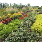 Plants (2)