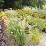 Plants (4)