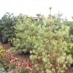 Plants Trees (10)