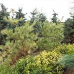 Plants Trees (11)