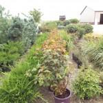 Plants Trees (12)