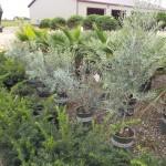 Plants Trees (13)