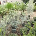 Plants Trees (14)