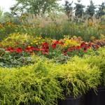 Plants Trees (3)