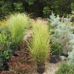 Plants Trees (6)