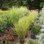 Plants Trees (7)