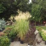 Plants Trees (9)